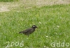 Bird/トリさん(Telephoto/望遠写真)