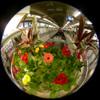 Terminal Flower Bed/終着駅の花壇(Fisheye Photo/魚眼写真)