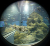 Fish/魚(Fisheye Photo/魚眼写真)