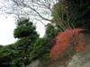 Tree/木々(Wide-angle photo/広角写真)