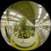 Terminal flower/ターミナルのお正月(Fisheye Photo/魚眼写真)