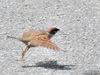 Sparrow wing/スズメの翼その2(Telephoto/望遠写真)