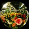 Terminal Flower/終着駅の花 (Fisheye photo/魚眼写真)