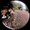 Flower/花(Fisheye photo/魚眼写真)