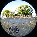 伐採された木の根元と周囲の対比、円周魚眼写真 Sigma 4.5mm f2.8 circular fisheye
