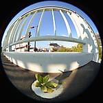 陸橋の排水溝から出ている木の芽、円周魚眼写真 Sigma 4.5mm f2.8 circular fisheye