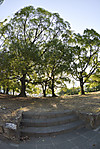 庭園(?巨大植え込み?)への階段、対角線魚眼写真 Nikon AF DX Fisheye-Nikkor 10.5mm f/2.8G ED