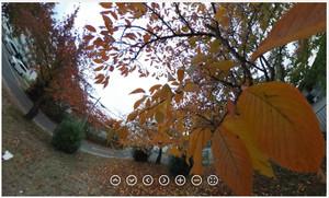 RICOH THETA / リコー・シータ作例:紅葉した樹の内側から
