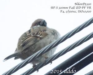 A150213sparrowdsc_7485s_2