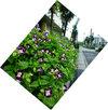 a050903flower6851b
