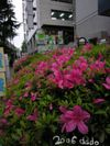 Flower/花と街(Wide-angle photo/広角写真)
