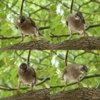 Bird#2/とりさんその2(Telephoto/望遠写真)