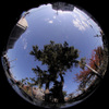 Sky and Tree/空と樹(Fisheye Photo/魚眼写真)
