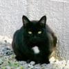 Black Cat/クロネコ(Telephoto/望遠写真)