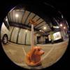 No parking dog/駐車おことわりのイヌ(Fisheye Photo/魚眼写真)
