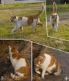 Cat/ネコ(Telephoto/望遠写真)