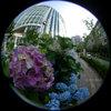 Hydrangea/アジサイ(Fisheye Photo/魚眼写真)